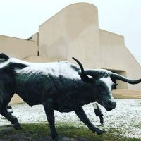 Johnson Building Art Museum South Texas Steer with Snow